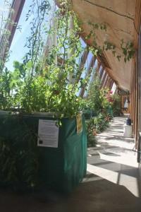 aquaponie v návštěvním centru